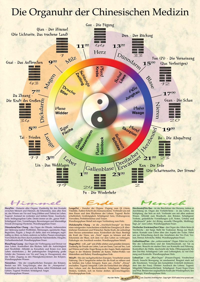 Die Organuhr der Chinesischen Medizin, Poster DIN A1